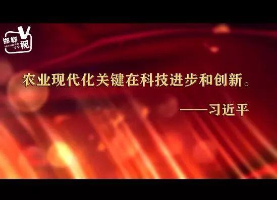 共话壮阔七十载 邯郸追梦新时代︱V视:邯郸农科院 创新结硕果